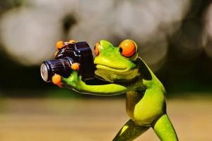 frog-881651_1920